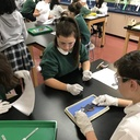 FROG Dissection 2018 7th grade photo album thumbnail 16